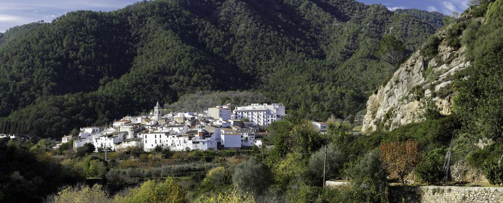 Paseo botánico por la Serra d'Espadà en la provincia de Castellón todo un éxito.