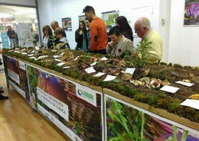 Exposición de setas y hongos Centro comercial el Mirador