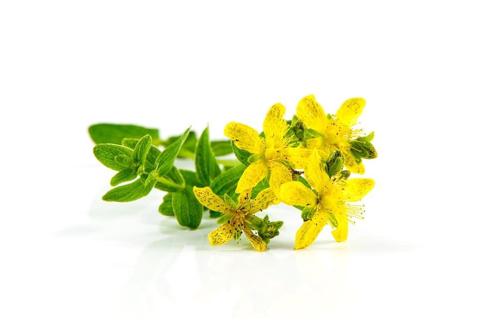 Hipérico, el antidepresivo natural más eficaz